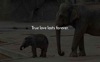 True Love Lasts Forever Quotes