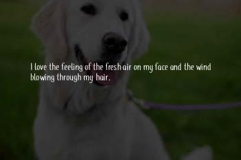 Wind Through My Hair Quotes